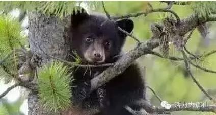 婺源信息网 新闻文章 婺源新闻  当前,正值野生动物活动频繁的季节